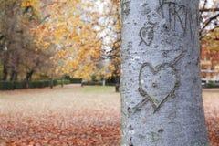 在树干的心脏形状 免版税库存照片
