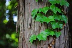 在树干的爬行物 免版税库存照片