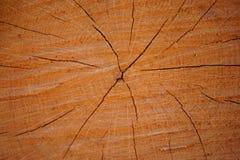 在树干的环形 库存照片