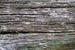 在树干的瘤 与一种灰色颜色的自然木纹理 免版税库存图片