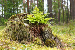 在树干的蕨 免版税库存图片