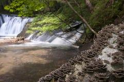 在树干的蘑菇在瀑布附近 库存照片