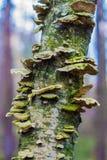 在树干的蘑菇 图库摄影