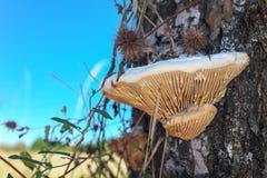 在树干的蘑菇 免版税图库摄影
