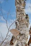 在树干的蘑菇 库存图片