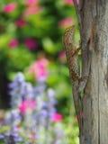 在树干的蜥蜴有五颜六色的花园背景 库存照片