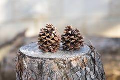 在树干的装饰菠萝 库存照片