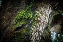 在树干的青苔 免版税库存照片