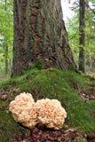 在树干附近的珊瑚蘑菇 免版税库存图片