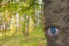在树干雕刻的眼睛 免版税库存图片