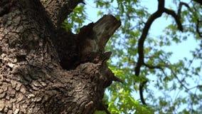 在树干-慢动作的蜂箱 影视素材