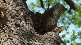 在树干-第5部分的蜂箱 影视素材