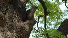 在树干-第3部分的蜂箱 影视素材
