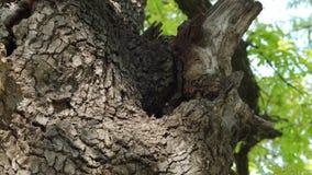 在树干- part9的蜂箱 影视素材