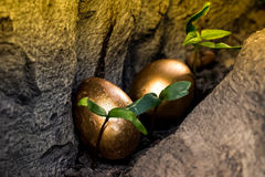 在树开头掩藏的两个金黄鸡蛋 免版税库存照片