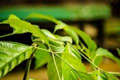 在树掩藏的绿色蛇蝎离开 免版税库存图片