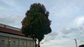 在树摇动的叶子由于风 股票录像