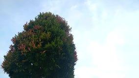 在树摇动的叶子由于风 股票视频