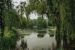在树木繁茂的庭院中的小湖在德哈尔城堡的一个雨天,在乌得勒支附近 免版税库存照片