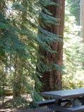 在树林的湖的Oregon.jpg野餐 免版税库存照片