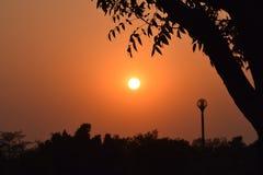 在树枝下的美好的日落 库存图片