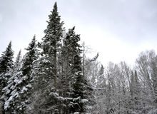在树枝两的冬天雪 图库摄影