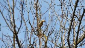在树枝栖息的麻雀 免版税库存图片