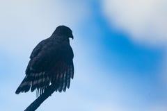在树枝的一只鸟 库存图片