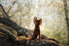 在树枝的一条狗 小的玩具狗 库存图片