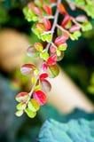 在树枝的五颜六色的叶子在秋天 图库摄影