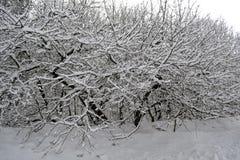 在树枝的冬天雪 免版税图库摄影