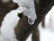 在树枝的冰冰柱在冬天,立陶宛 免版税库存照片