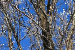 在树枝的冰 免版税库存照片