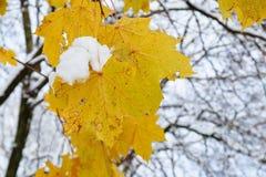 在树枝的前片叶子与对此的雪采撷 免版税图库摄影
