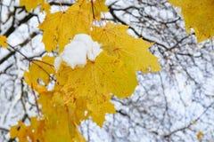 在树枝的前片叶子与对此的雪采撷 免版税库存图片