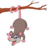 在树枝的动画片滑稽的负鼠 免版税库存图片