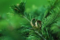 在树枝的圆环 库存照片