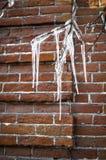 在树枝的大纯净的冰柱在老砖墙背景 免版税库存图片