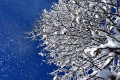 在树枝的雪 免版税库存照片