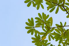 在树枝的绿色叶子 免版税库存图片