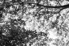 在树树荫下 免版税图库摄影