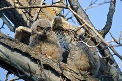 在树栖息的逗人喜爱的幼小猫头鹰之子 库存照片