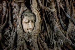 在树根的菩萨头在Mahathat寺庙,历史阿尤特拉利夫雷斯 图库摄影