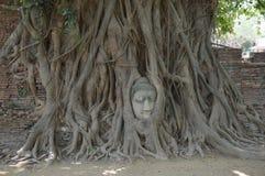 在树根的菩萨头, Wat Mahathat,阿尤特拉利夫雷斯 库存照片