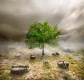 在树桩中的绿色树 图库摄影