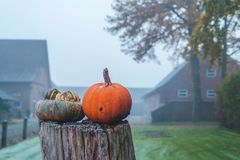 在树桩的两个南瓜与薄雾的农场在背景中 免版税库存图片