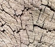 在树桩的圈子 免版税库存照片