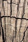 在树桩的圈子 免版税库存图片