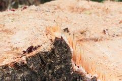 在树桩的木头的抽象,波浪样式 图库摄影