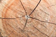 在树桩的木头的抽象,波浪样式 免版税库存图片